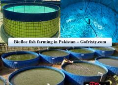 Biofloc fish farming in Pakistan with Biofloc Technology (BFT)