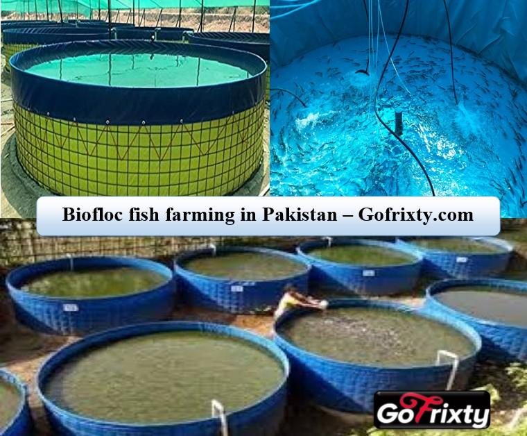 Biofloc Fish Farming Pakistan gofrixty