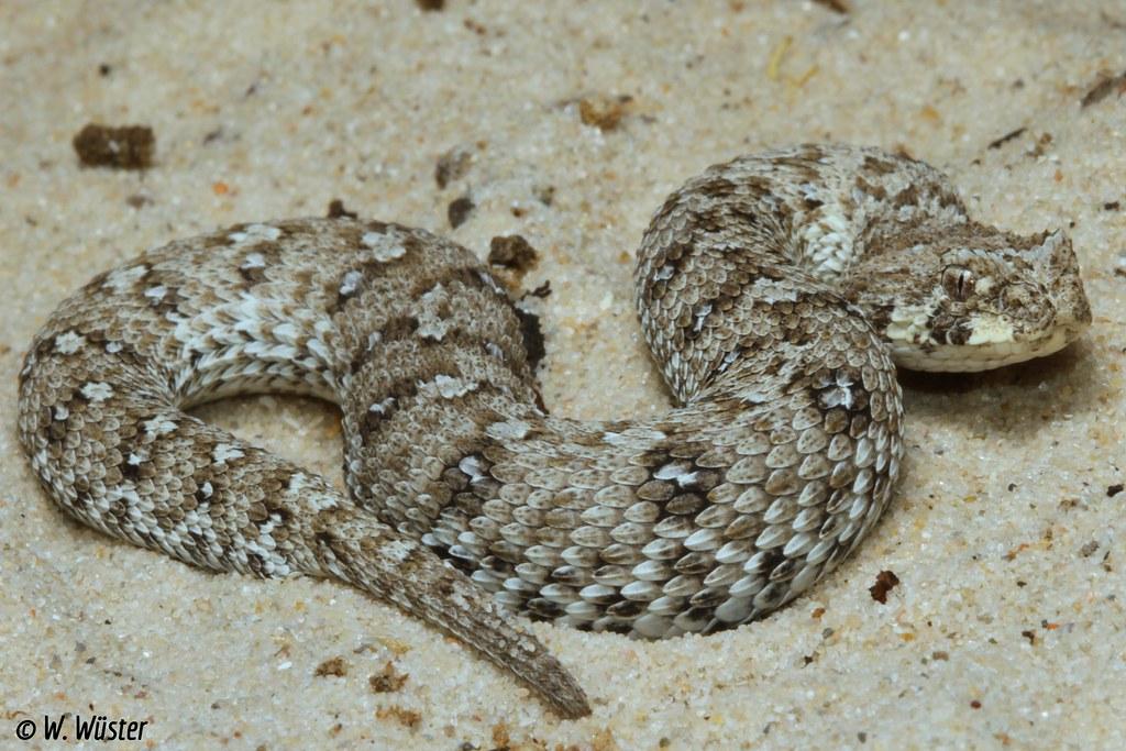 Smallest Snake