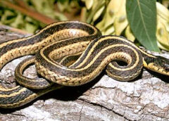Snakes: Types, details, and facts
