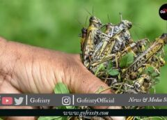 Government of Pakistan's Continuous efforts to fight the Locust | Latest Report